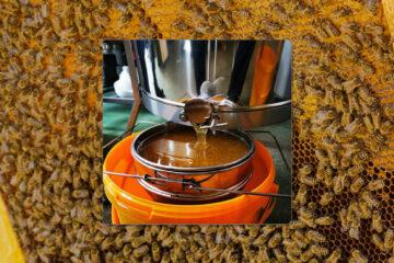 Honig aus eigener Herstellung • Eckert • Metzgerei | Catering